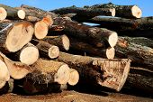 Close-up Of A Pile Of Hardwood Logs With Blue Sky poster