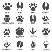 Animal Trails. Next To The Name Of The Animal. Animal Tracks Vector Illustration. Animal Paw Print W poster