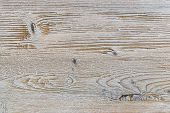 Shabby White Rustic Painted Wood Texture Close-up As Background. poster
