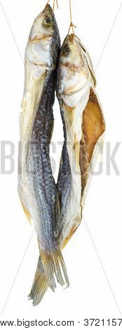Two Dried Salted Grey Mullet Fishes