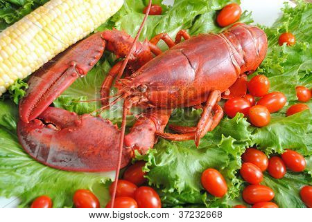 Corn on the Cob with Lobster on a Lettuce and Tomatoes