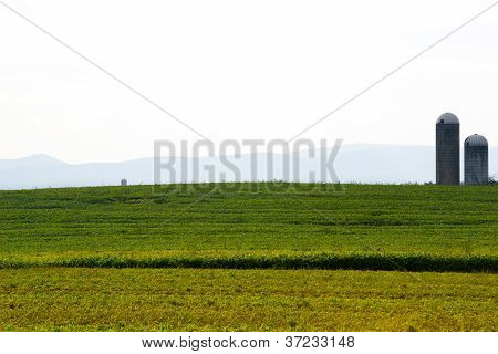 Scenic Rural View Of Farmers Soybean Filed