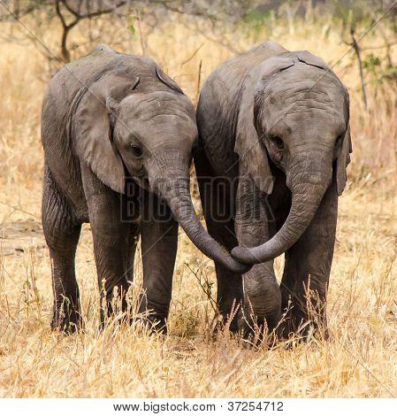 Mejores amigos - elefantes bebé