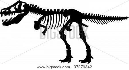 Tyrannosaurs Rex T.Rex Dinosaur Skeleton
