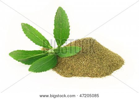 Fresh and dry Stevia Rebaudiana isolated on white background