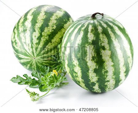 Two watermelons with a leaves on a white background.