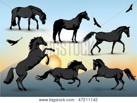 Set of silhouettes of standing, running and galloping horses and birds with a sunset background