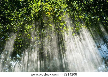 Spring shower sunbeams