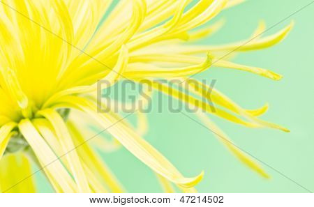 Yellow Flower Green Background