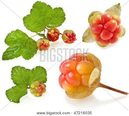 cloudberry set close up macro shot  isolated on white background