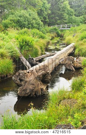 Log Rests In A Creek With A Bridge