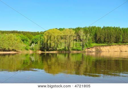 Landscape - Spring Wood
