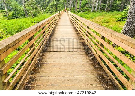 A Bridge Over Marshy Area In A Forest