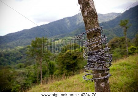Barbed Wire On A Tree
