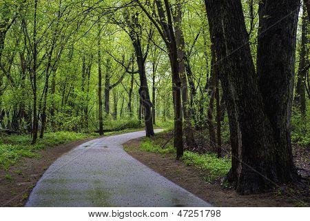 Wet Path, Spring