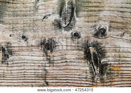 Wood Grain & Black Knots - Background.