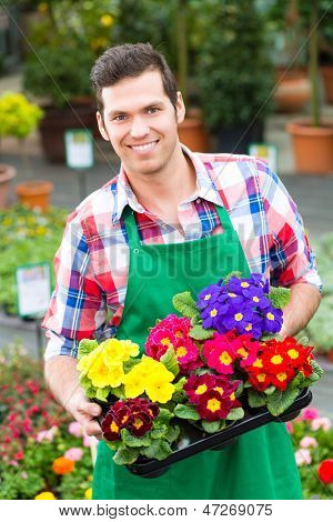 Florist or gardener in flower shop, greenhouse or nursery