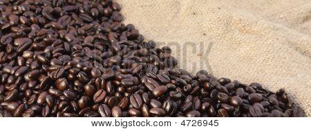 Coffee Beans Banner