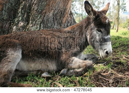 Donkey Beside a Tree