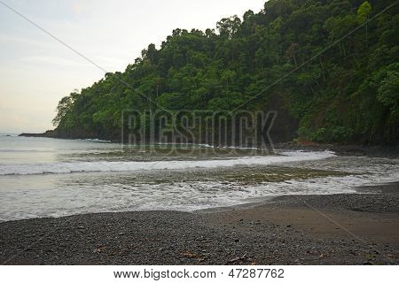 Landscape Of Trees And Beach With Water