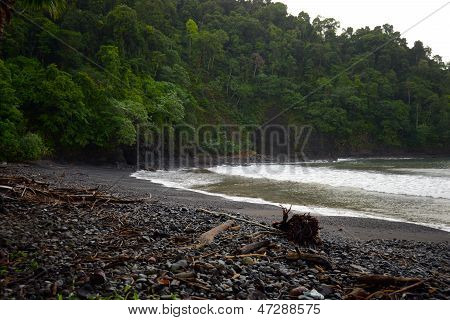 Rocky Beach In The Tropical Rainforest