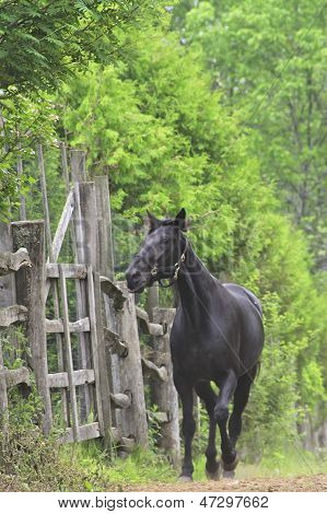 Black horse in the garden