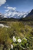 stock photo of hookers  - Mt Cook with Lily or Buttercups in the Hooker valley - JPG