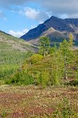 foto of taimyr  - The end of the summer on the Putorana plateau - JPG