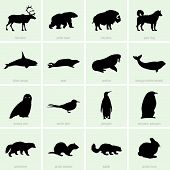 stock photo of wolverine  - Set of polar animal icons on green background - JPG