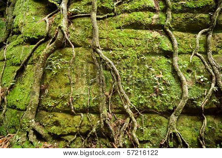 Moss and tree roots