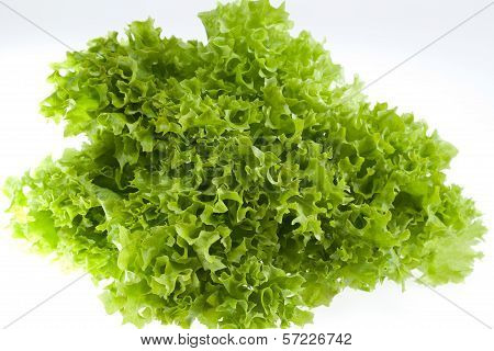 fresh green lettuce jagged isolated on white background - close up