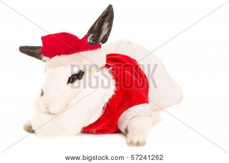 Rabbit with christmas costume