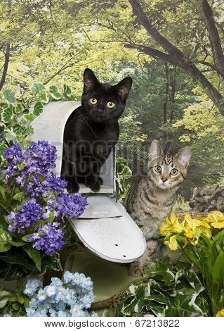 Two Kittens and a Mailbox