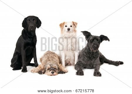 Four dogs on white