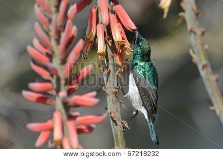Feeding bird