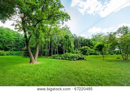 beautiful view of the park forest and mountain brook. wood