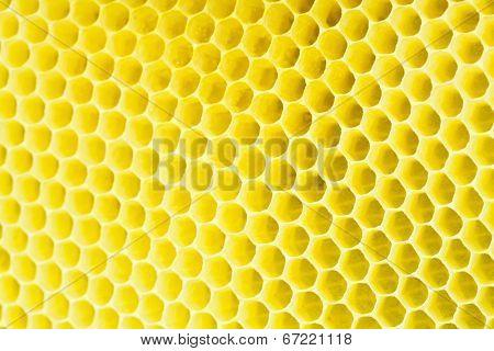 Honeycomb - close up texture