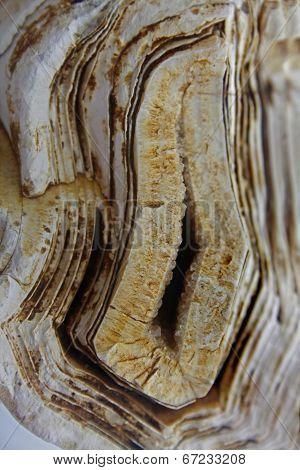 Molecular Fossils Stromatolite Stone
