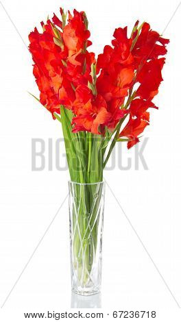 Red gladiolus in vase