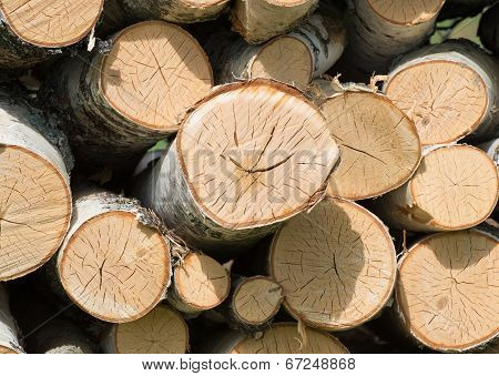 Smiling Log In Woodpile
