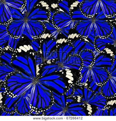 Blue Background Texture Made Of Common Tiger Butterflies In Fancy Color And Patterns