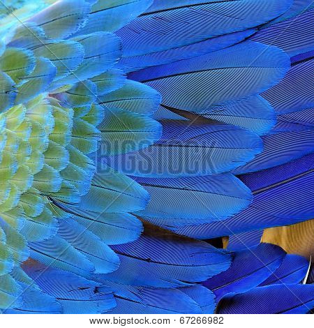 Close Up Of Beautiful Blue Macaw Bird Feathers In Great Details