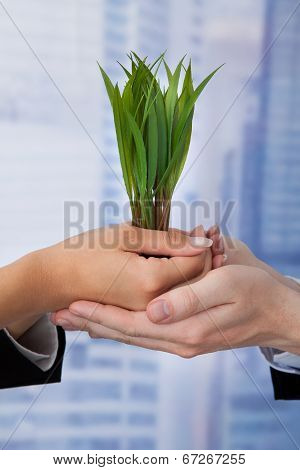 Business People Holding Saplings In Office