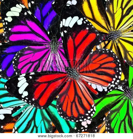 Great Background Pattern Made Of Various Colorful Butterflies