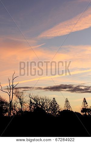 Tree Sihouettes at Sunset 1