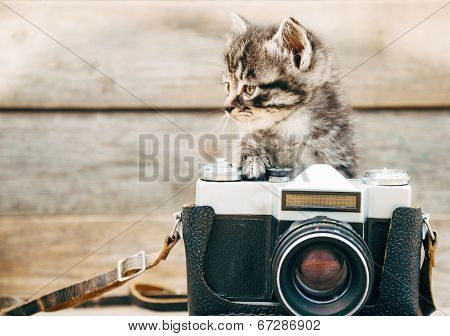 Curiosity Kitten With Old Camera