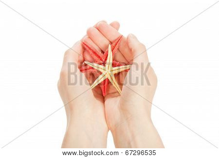 Colourful starfishes in the hands