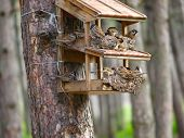 stock photo of fulcrum  - A starling house for birds somewhere in a forest - JPG