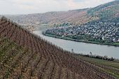 stock photo of moselle  - Riesling vineyards on Moselle river - JPG