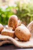 foto of agaricus  - Fresh brown whole uncooked Agaricus mushrooms on a hessian sack one of the most cultivated edible mushrooms in the world and a popular ingredient in savory and vegetarian cooking - JPG